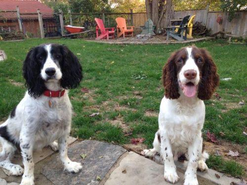 two dawgs