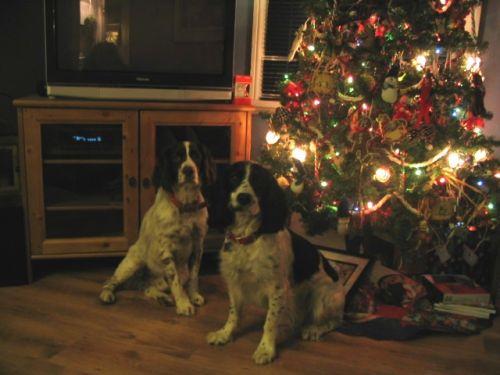 2005 doggie xmas